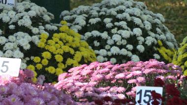 flori festival