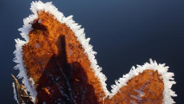 Bruma toamna primul inghet frunza maro - Guliver GettyImages