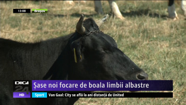 LIMBA ALBASTRA