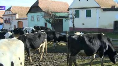 vaci viscri 1