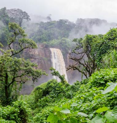 jungla africa camerun