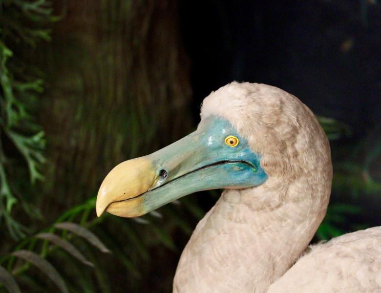 Pasare dodo