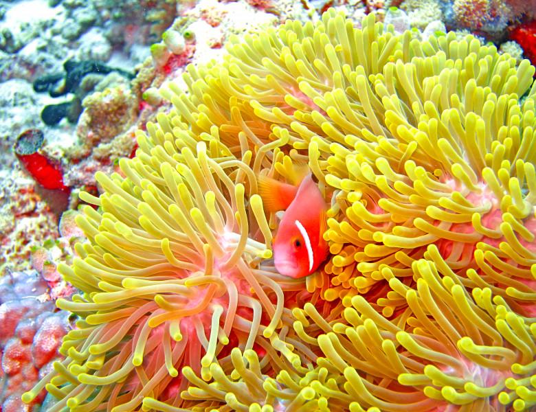 Coral Hawaii