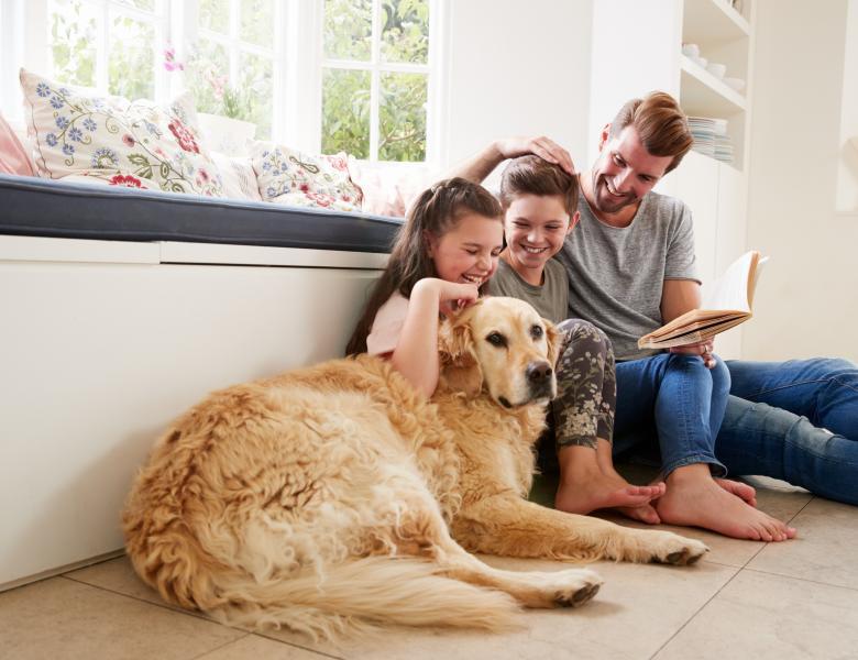 Caine golden retriever familie