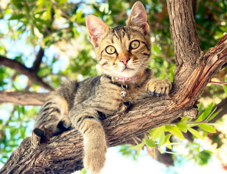 Pisica in pom