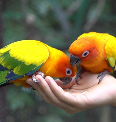 Papagali in mana