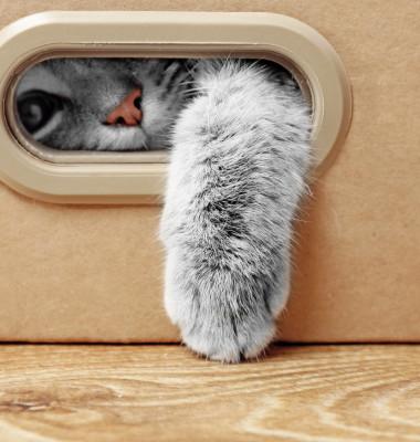 pisica in cutie