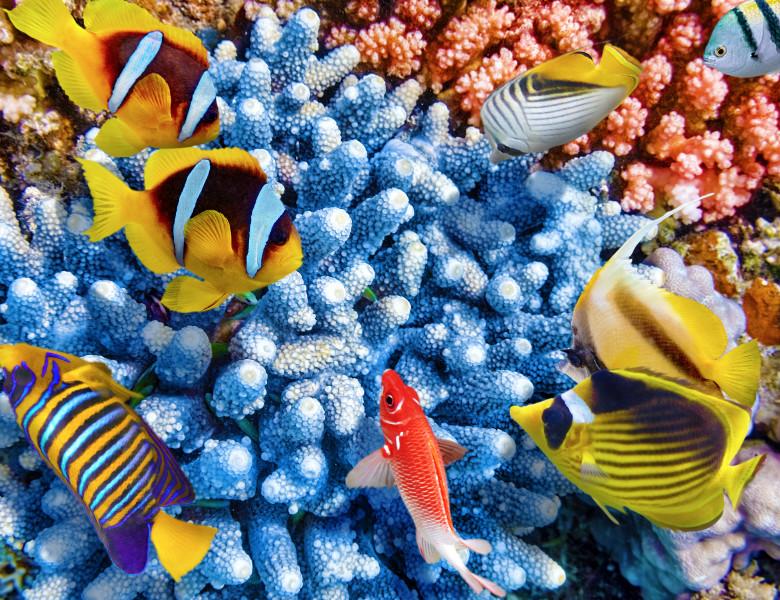 marea bariera de corali pesti