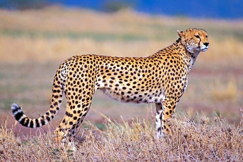 Top 10 Cele Mai Rapide Vietuitoare De Pe Terra& Ce Animal