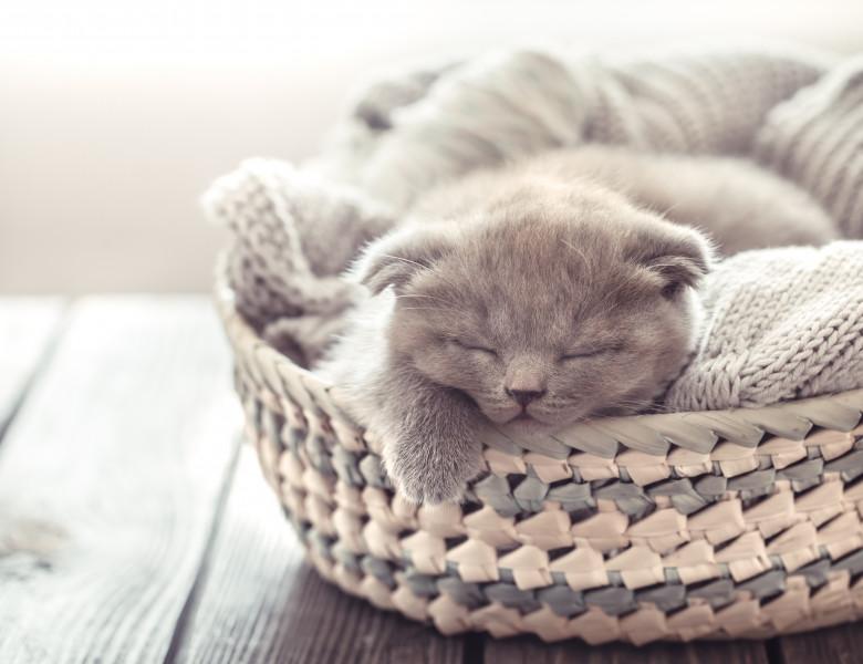 pisica in cos
