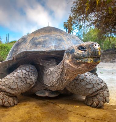 Testoasa de Galapagos