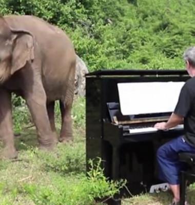 elefant dans 3