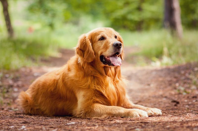 cea mai bună vedere a unui câine