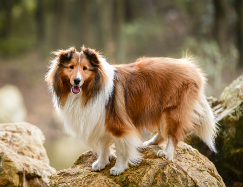 Ce văd câinii? Descoperă viața prin ochii câinelui tău   Un Blog Despre Câini