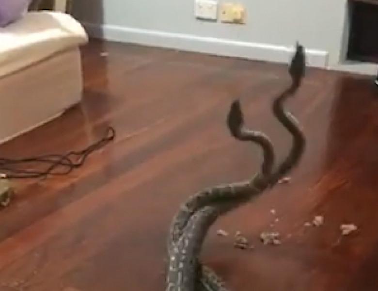 2 serpi