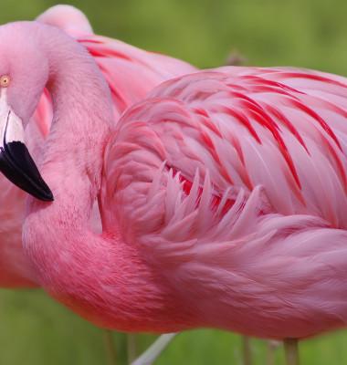 flamingo 2 (2)