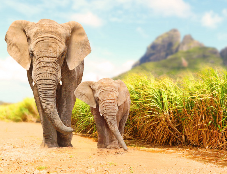 elefanti 2