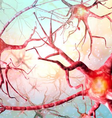 neuroni 1