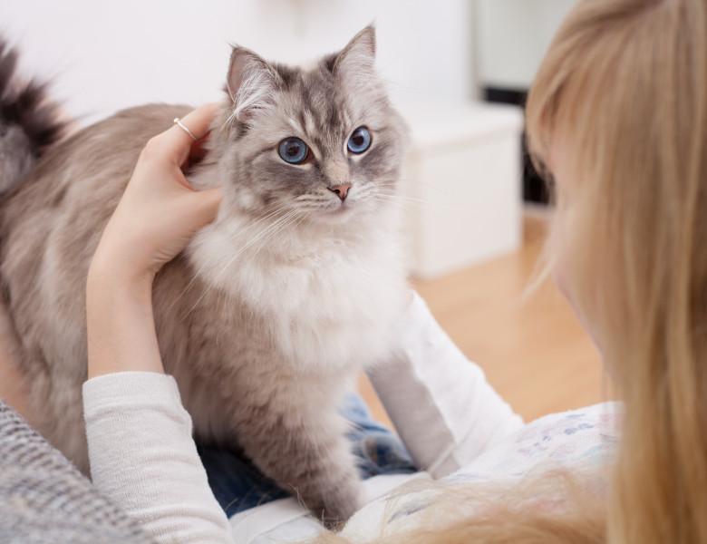 pisica stapan x