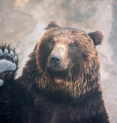 urs facut cu mana