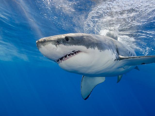 dating site- ul pe rezervorul de rechin)
