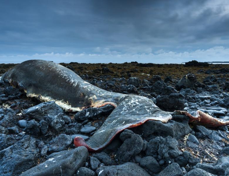 balena casalot esuata