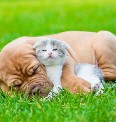 caine si pisica 2