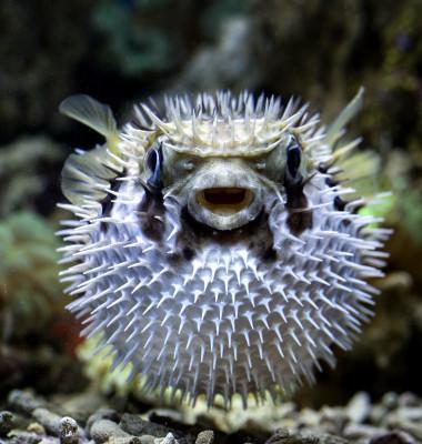 Peste Fugu
