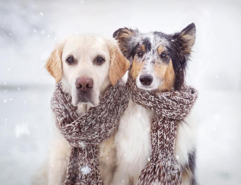 doi caini zapada iarna