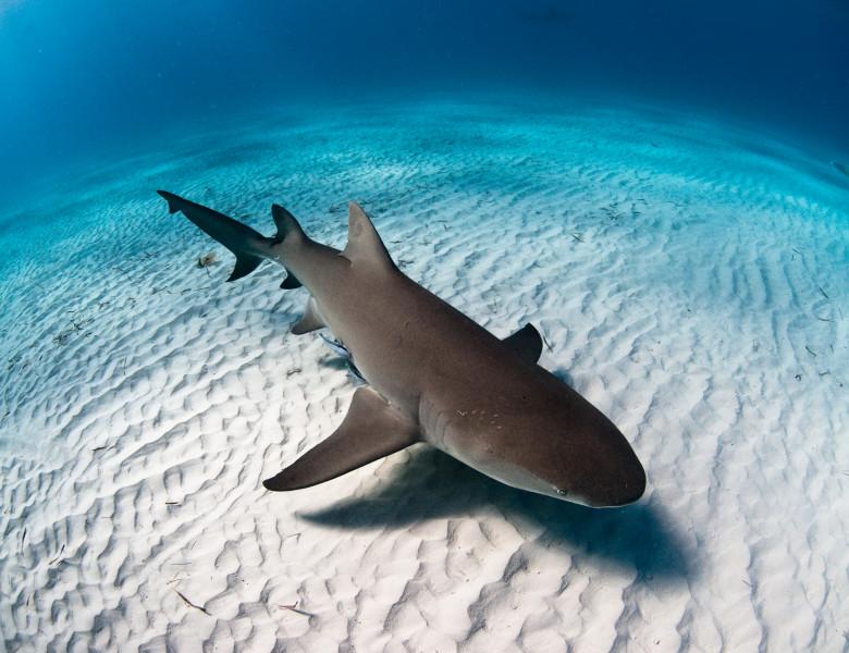 rechin in ocean jos