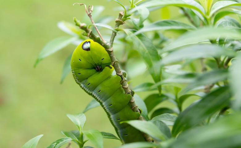 omida verde surprinsa printre frunze