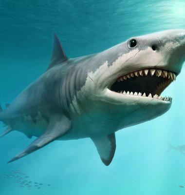 rechin megalodon