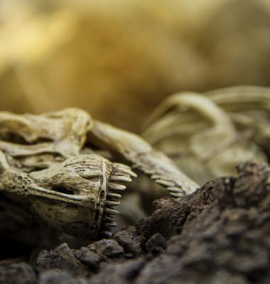 extinctie dinozaur pamant animal mort