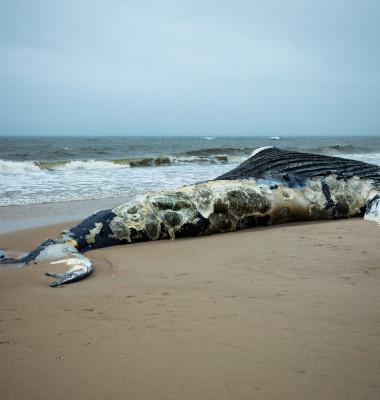balena esuata plaja