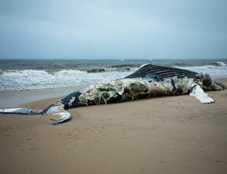 economisiți greutatea balenelor pierd)