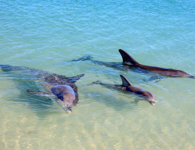 delfini pe plaje