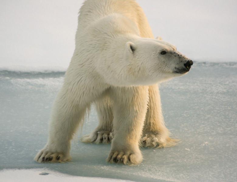 urs polar slab