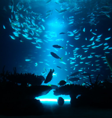 mare adancime ocean