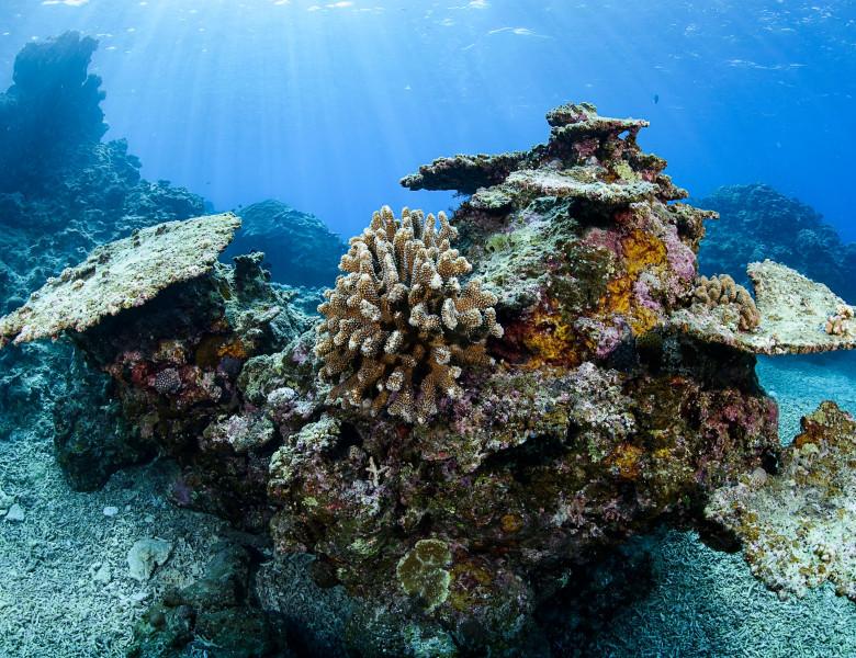 coral pe moarte ocean