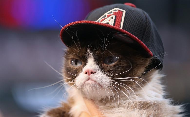 pisica grumpy cat cu palarie pe cap