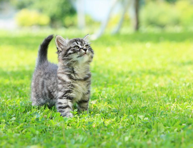 pui de pisica afara in expeditie