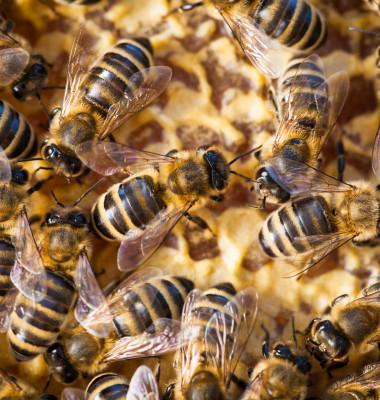 multe albine