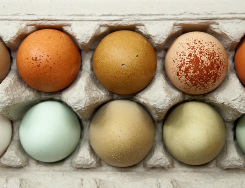 oua diferite culori