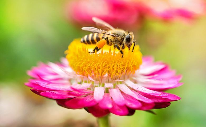 albina pe o floare