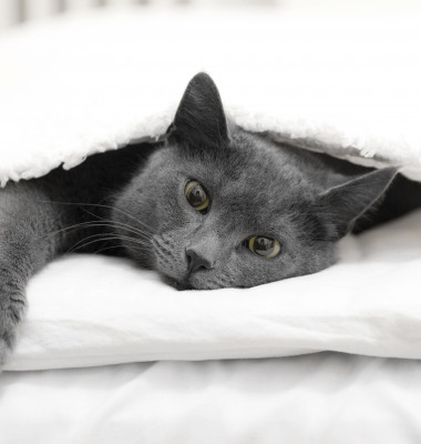 pisica in pat