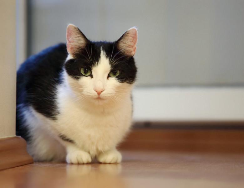 O pisica hoață a reușit să fure peste 50 de perechi de încălțăminte. Cum a  reacționat stăpânul când a aflat de activitățile ei nocturne