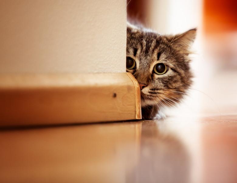 pisica perete