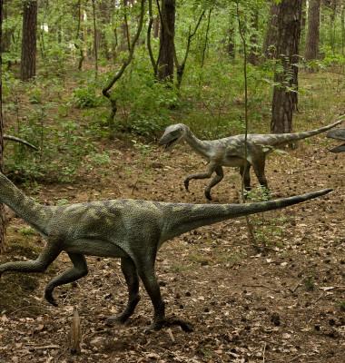 dinozauri raptor
