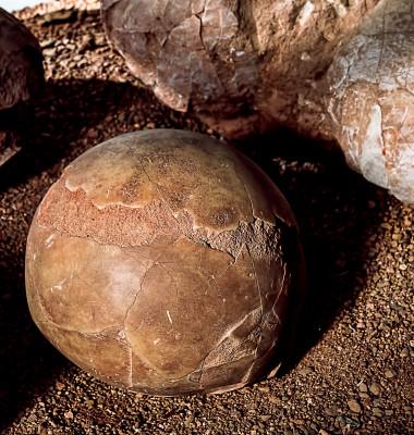 ou dinozaur fosilizat