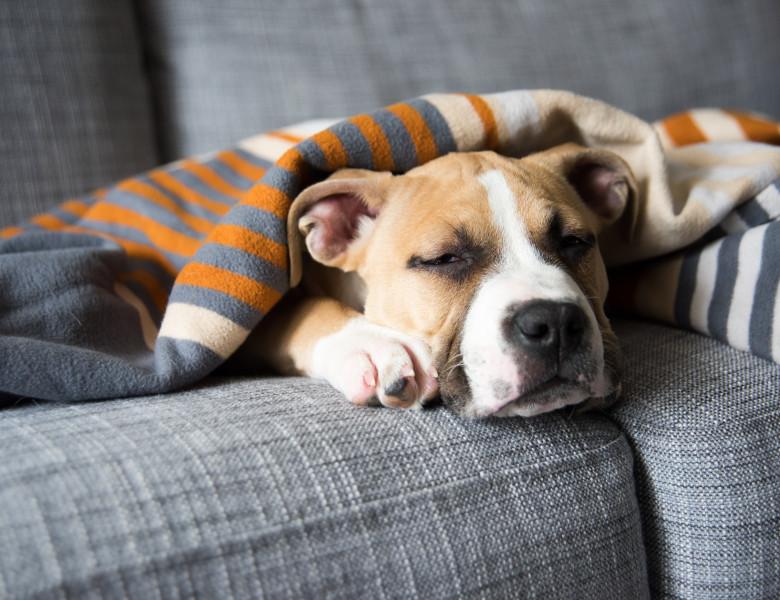 de ce nu-i poți da câinelui ibuprofen